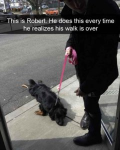 dog-this-is-robert-he-does-this-every-time-he-realizes-his-walk-is-over.jpg