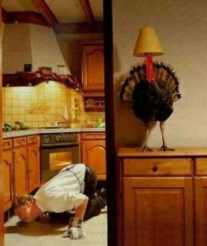 turkey funny 60.jpg
