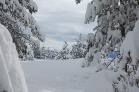 our back yard in winter.jpg