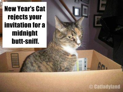 Phoebe-new years-cats-funny-comic.jpg