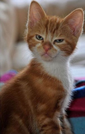 Mean-looking-cat-Viral-Cats-03.jpg