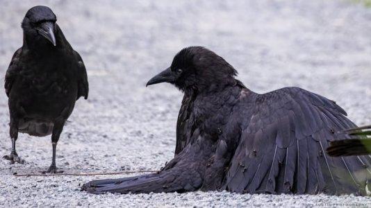 crowslast.jpg