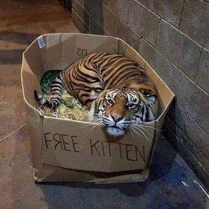 covid cat joke.jpg