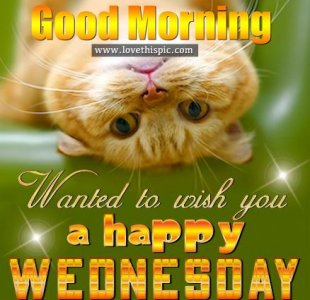 Good Morning, Wanted To Wish You A Happy Wednesday.jpeg
