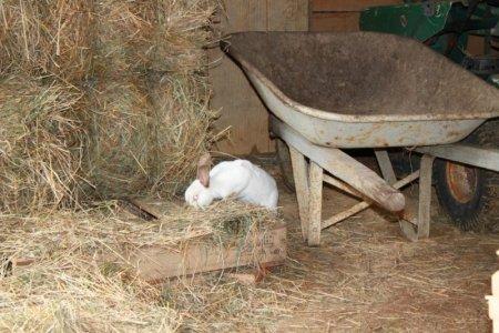 in_the_hay (2).jpg