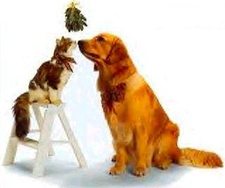mistletoe cat and dog (2021_01_15 01_55_28 UTC).jpg