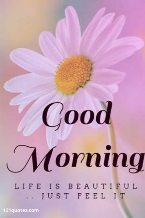 good-morning-messages-with-flowers.jpg