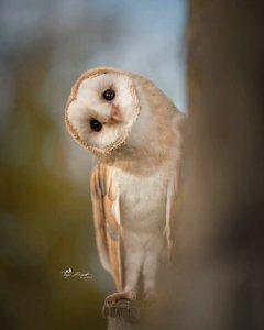 owl 20.jpg