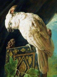 white parrot.jpg