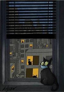 covid19 cat joke.jpg