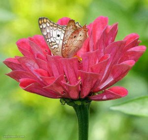 beautiful-flower-photo-with-butterfly-by-amazing-pictures[1].jpg