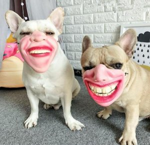 Dog masks.jpg
