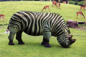 Rhino-With-Zebra-Stripes-Funny-Picture.jpg